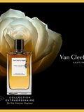 Rose velours – Van Cleef & Arpels